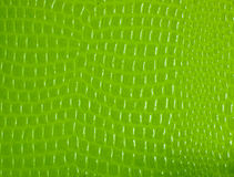 Crocodile skin pattern paper Stock Image