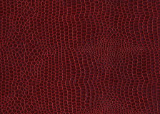 Crocodile skin red background Royalty Free Stock Photo