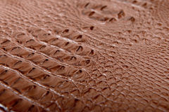 The crocodile skin - stock photo Royalty Free Stock Image