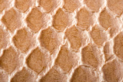 Crocodile skin texture Royalty Free Stock Photography
