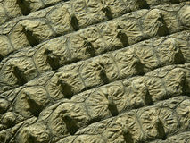 Crocodile skin - texture Royalty Free Stock Photos
