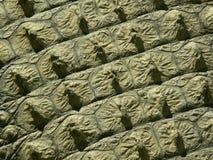 Crocodile skin - texture. Detailed shot of crocodile skin, texture Royalty Free Stock Photos