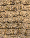 Crocodile skin texture for background Stock Images