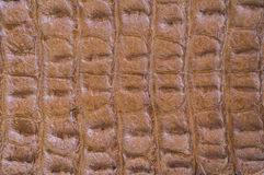 Crocodile skin texture for background Royalty Free Stock Images