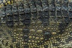 crocodile skin texture background. Stock Photo