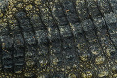 Crocodile skin texture background. Royalty Free Stock Photos