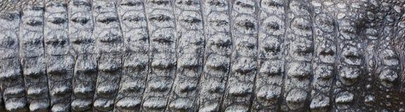 Crocodile skin texture Royalty Free Stock Photo