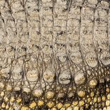 Crocodile skin texture Stock Photography