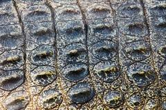 Crocodile skin texture Stock Image