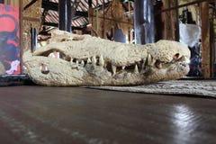 Crocodile skull Royalty Free Stock Images
