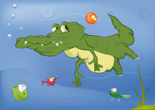 Crocodile and small fishes. Green crocodile floating with small fishes Stock Photo