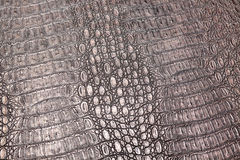 Free Crocodile Snake Serpent Alligator Closeup Stock Images - 85244344