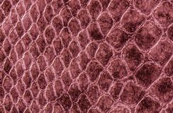 Crocodile or snake skin leather Stock Photo