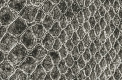 Crocodile or snake skin leather Royalty Free Stock Image