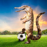 Crocodile soccer player Royalty Free Stock Photography