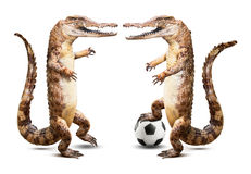 Crocodile soccer player Stock Photography