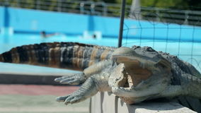 Crocodile statue at pool. Group of people going to vacation at pool where they are a lot of waterslides and pools, attractions and amusement stock footage