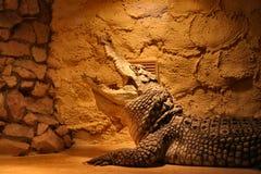 Crocodile in a terrarium Royalty Free Stock Photography