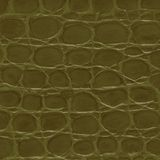Crocodile texture. Stock Image