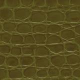 Crocodile texture. Stock Image