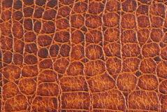 Crocodile texture royalty free stock image