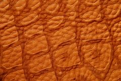 Crocodile Textured Leather Stock Images