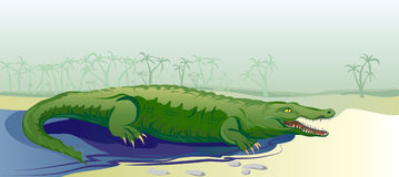 Crocodile in tropic background Royalty Free Stock Photos