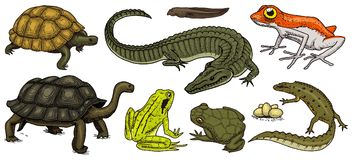 Crocodile and turtle. Reptiles and amphibians set. Pet and tropical animals. Wildlife and Frogs, lizard and turtle. Chameleon and anuran Engraved hand drawn in vector illustration
