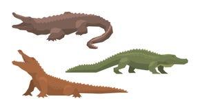 Crocodile vector cartoon crocodilian character of green alligator carnivore illustration animalistic set of dangerous. Amphibian predator with jaws isolated on vector illustration