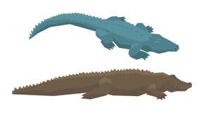 Crocodile vector cartoon crocodilian character of green alligator carnivore illustration animalistic set of dangerous. Amphibian predator with jaws isolated on stock illustration