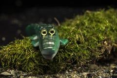 Crocodile vert de jouet photographie stock