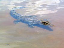 A crocodile very close!!. A croco very close to our boat in yje Kakaddo National Park Royalty Free Stock Photography