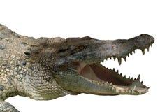 Crocodile. Is a vicious animal Stock Photos