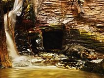 Crocodile with waterfall. Crocodile with a waterfall while relaxing in the zoo Royalty Free Stock Photography