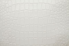 Crocodile white artificial leather Stock Image