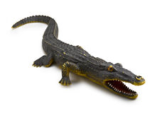 Crocodile on White Background Royalty Free Stock Photo