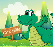 A crocodile beside a wooden signboard Royalty Free Stock Image