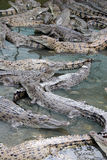 Crocodiles Royalty Free Stock Photography