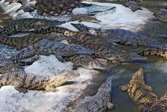 Crocodiles Image libre de droits