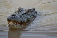 Crocodiles d'eau de mer dans Adelaide River, territoire du nord, Australie Photos stock