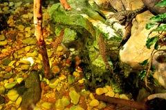 Crocodiles dans la mini-serre Photo stock