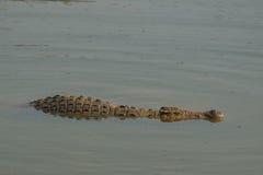 Crocodiles de l'Afrique image libre de droits