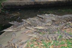 Crocodiles de l'Afrique images stock