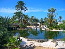 The crocodiles on the farm on Djerba Island, Tunis Stock Image