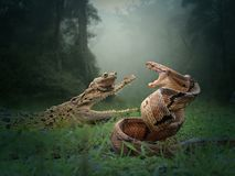 Batle of snake, crocodile and the frog stock images