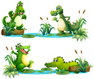Crocodiles living in the pond Stock Image