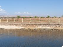 Crocodiles of the nile. Crocodile farm in Morocco agadir to relocate the breed stock images