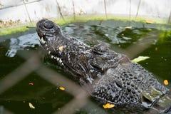 Crocodiles Resting at Samut Prakan Crocodile Farm and Zoo, Thail Royalty Free Stock Images