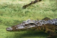 Crocodiles Resting at Samut Prakan Crocodile Farm and Zoo, Thail Stock Photos