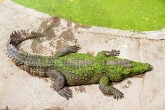 Crocodiles Resting at Samut Prakan Crocodile Farm and Zoo, Thail Royalty Free Stock Photography